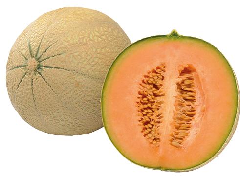 Cantaloupemelonen
