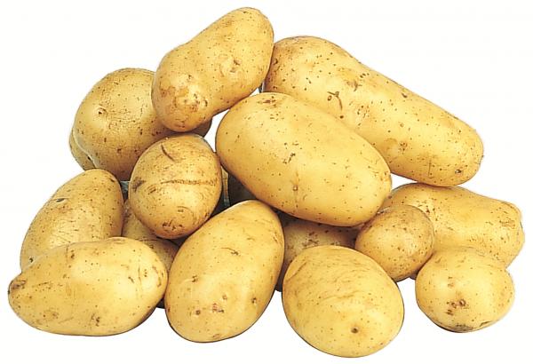 Erdäpfel - Kartoffeln aus Sachsen, mehligkochend, 2,5 kg