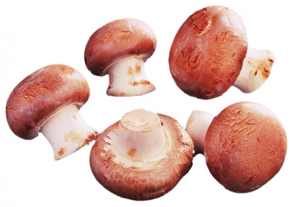 Champignons braun 250g